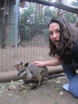 Our first Kangaroo encounter. , Jennifer A - December 2011