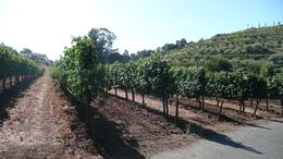 One of the wineries we visited, Jon C - September 2010