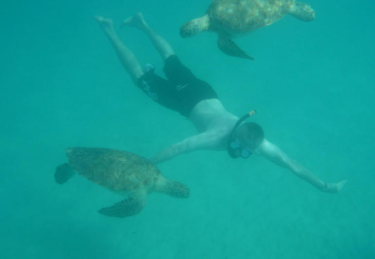 Swimming with the Turtles - Barbados