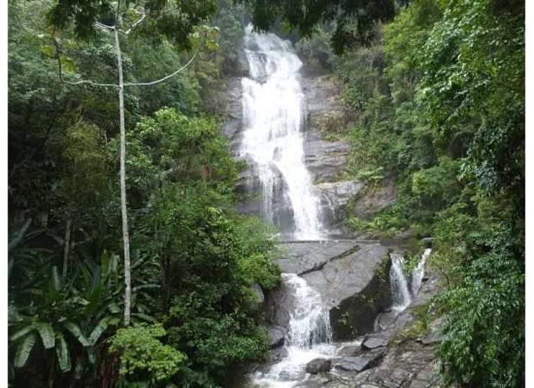 Tijuca Rainforest - Rio de Janeiro