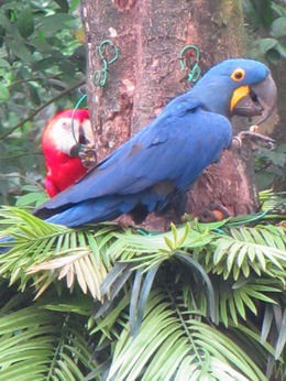 Macaws , fionatully - October 2015