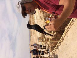 à Masada , leroypae - May 2016