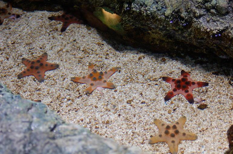 Starfish - San Diego