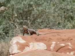 We got really lucky seeing this little guy in Zion, World Traveler - October 2012
