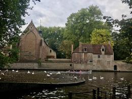 There was a nice story about why there are so many swans in Bruges , KCinCA - October 2016