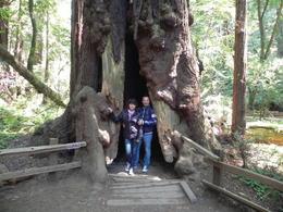 Nous voilà au pied d'un séquoia géant dans la forêt de Muir Woods , PATRICE L - May 2013