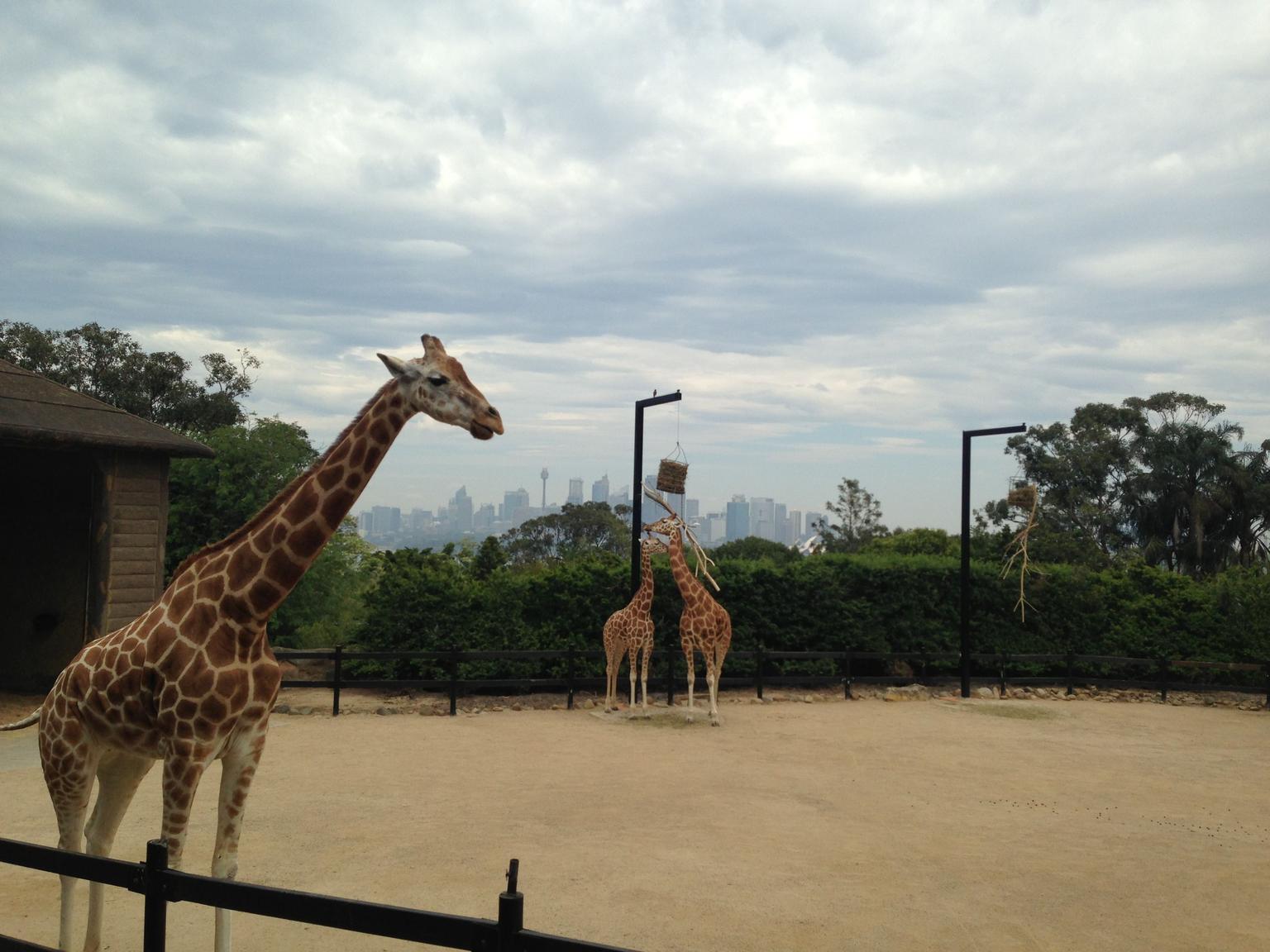 MÁS FOTOS, Crucero por el puerto de Sídney con entrada al Zoo de Taronga