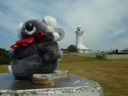 Katy Koala visiting the light house at Watsons Bay. , Eric M - November 2012