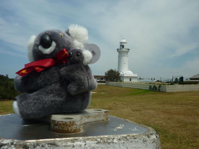 Katy Koala - Watsons Bay. - Sydney
