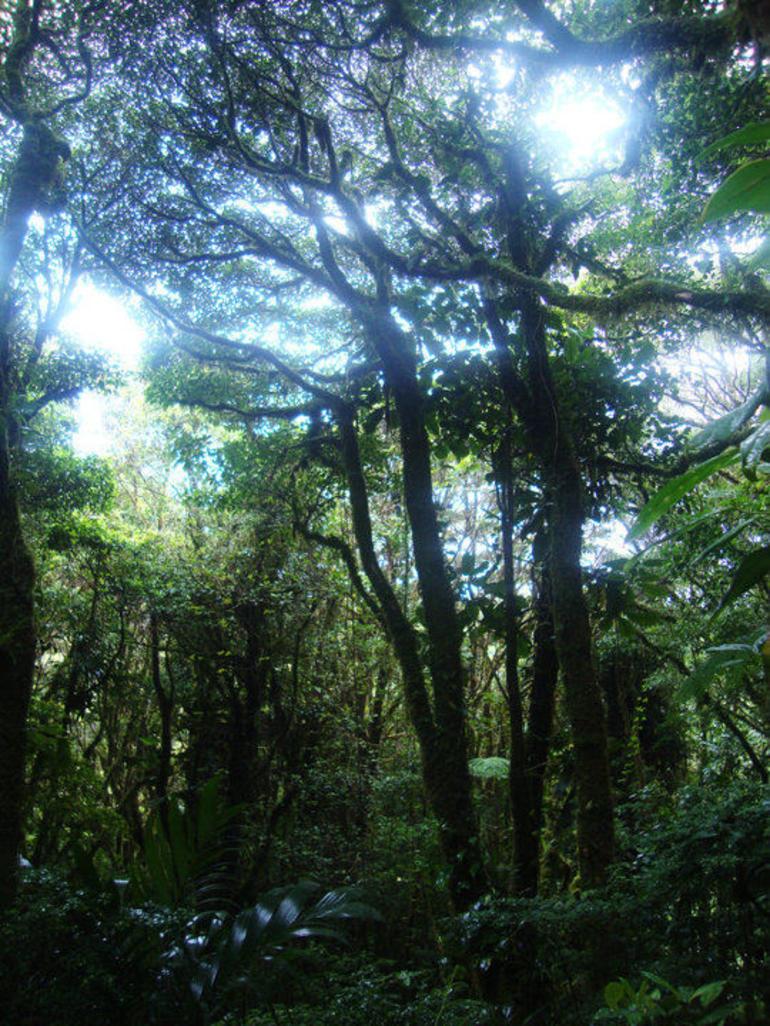 Rainforest - La Fortuna