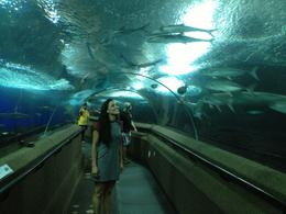 Underwater World oceanarium on Sentosa Island, Asha & Brock - July 2013