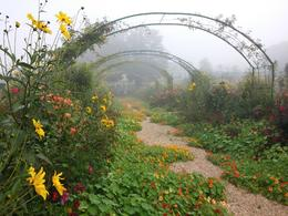 Our morning drive in late September had some early fog, which made the French countryside timeless. Monet had 7 gardeners working his gardens, just as they do today. The beauty at every turn is both ... , travel - October 2014
