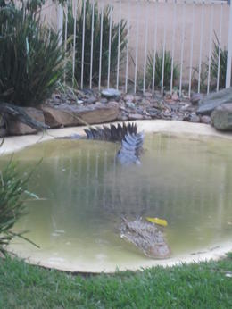 Crocodile at Featherdale Zoo , Jennifer A - December 2011