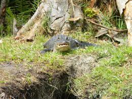 Everglades , Francis B - May 2014