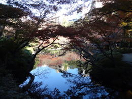 Visiting a Japanese Garden on the grounds of the Tea Ceremony. , Yvette - December 2013