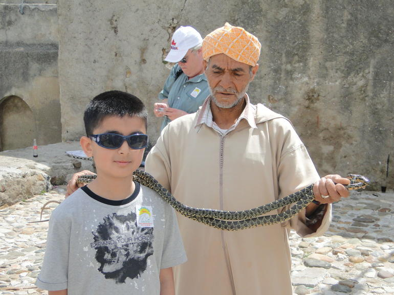 Morocco snake charmers - Malaga