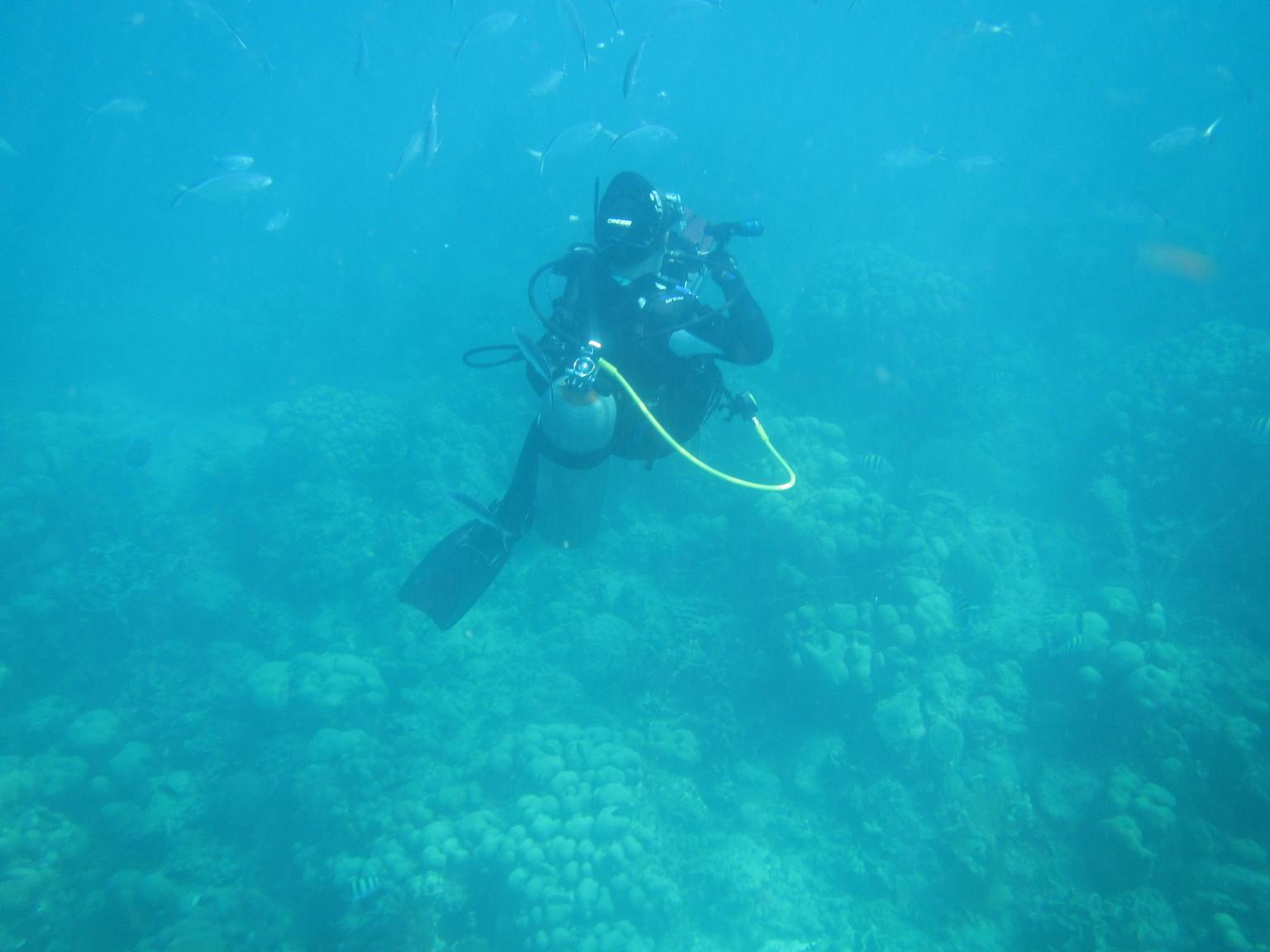 MÁS FOTOS, Tour de buceo de superficie en la isla de Catalina de un día completo desde Punta Cana