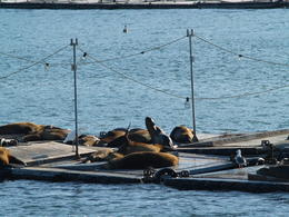 San Diego Harbor Tour - Friday, August 15, 2014. San Diego Bay wildlife hanging out on the docks. , Carrie Mc - August 2014