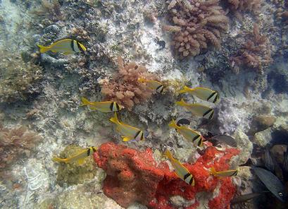 Photo of Key West Plongée avec masque et tuba autour d'une épave à la
