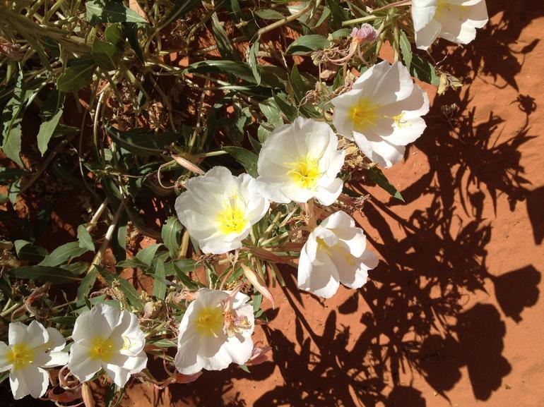 Desert Flowers - Las Vegas