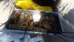 A preview of the lobster they were selling on the beach! , Shauna - April 2016