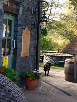 Having a dram of Whiskey on the patio @ Loch Lomond Oak Tree Inn , raci88 - November 2016