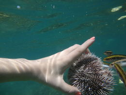 One of the Chukka tour guides called us over and cracked open a sea urchin to show how fish flock to the meat in the sea urchin -- to them it's a delicacy! , Natalie K - March 2015