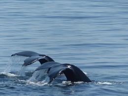 A une heure de mer, au large de Boston, et pourtant dans un autre monde , L.H - September 2014