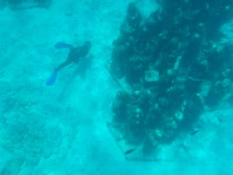 The water is clear and the statues look awesome. Sorry my camera is not the greatest! , nora - August 2015