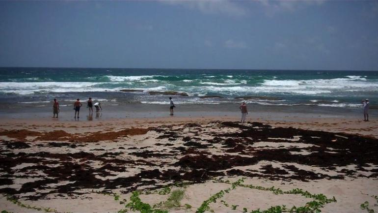 Best of Barbados - Barbados