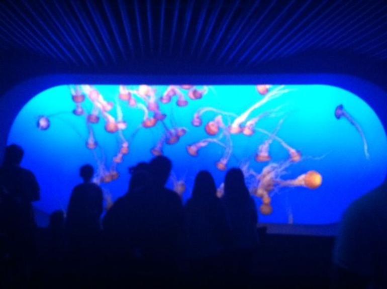 Jellyfish - Monterey & Carmel