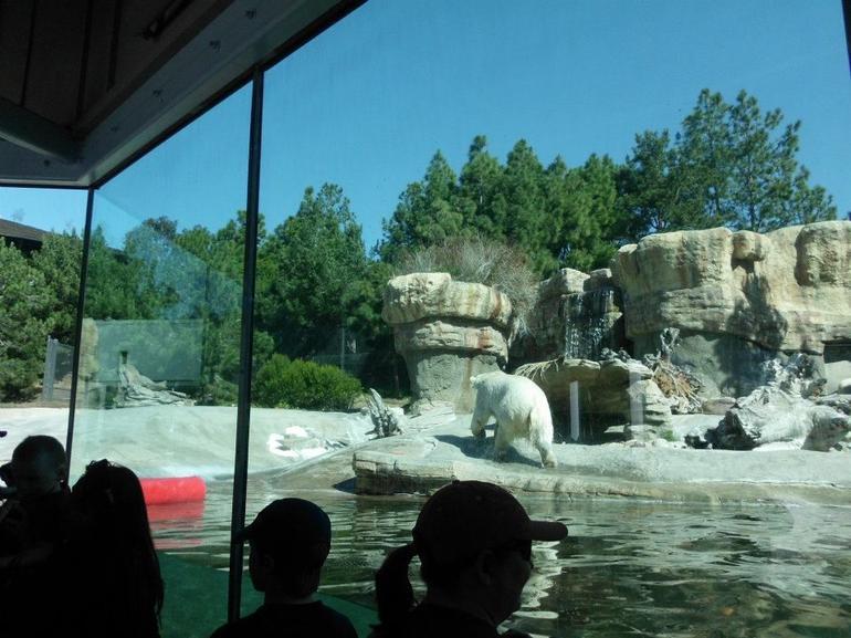 Polar Bears - San Diego