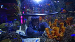 ... viewing tank in the aquarium.. , Theresa - January 2017