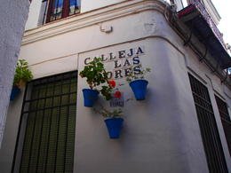 Saw the famous flower street on our walking tour after the Mezquita, Rachel - January 2014