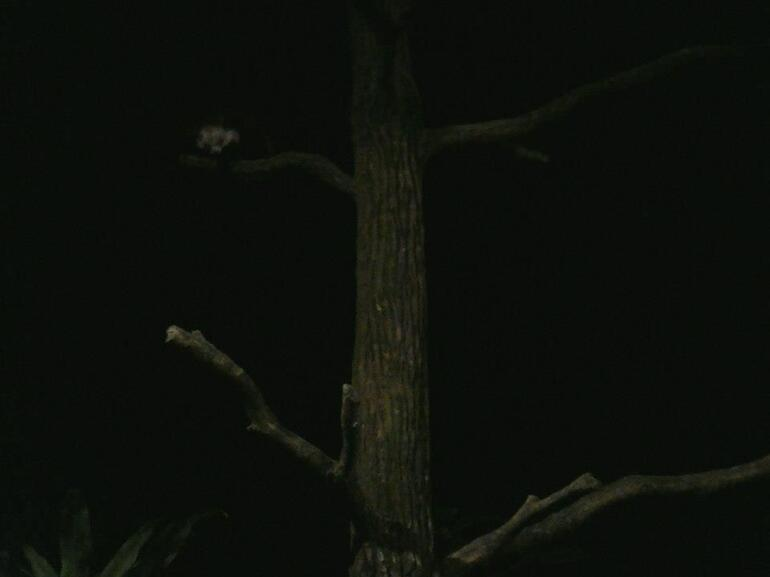 Night Safari - Singapore