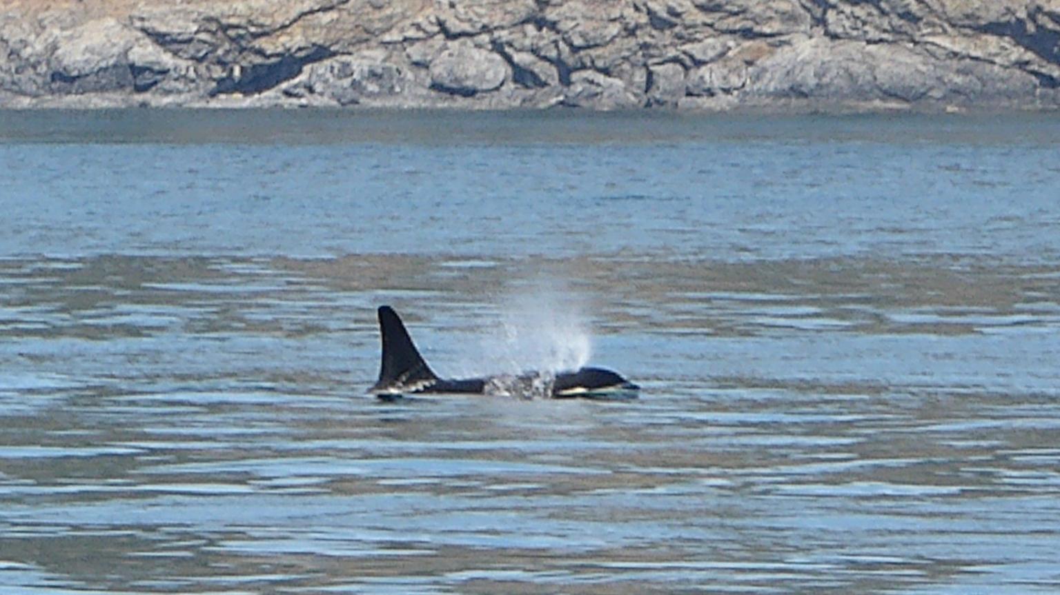 MÁS FOTOS, Victoria Whale and Wildlife Cruise