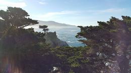 View of the Lone Cypress , Ma. Teresa H - February 2017