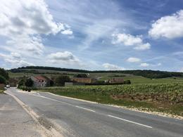 Walking along the vineyard by Nicolas Maillart Champagne house , Kelley G - May 2017