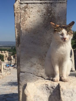 Kitties haunt the ruins and add to the amazing experience of walking through this area rich in history. Bring a couple of Euros to drop into the feed the cat fund located near the bathrooms. , kristina g - June 2016