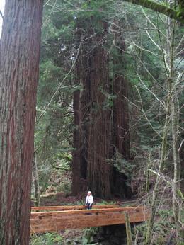 Tremendous tree!, John Keith W - February 2010