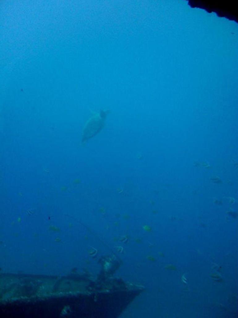 Turtle - Oahu