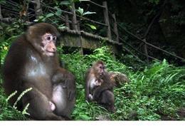 Monkeys! - June 2012