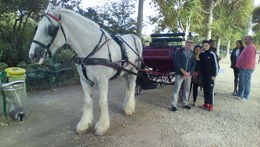 getting ready to go for the ride of our lives! , MARIA L - October 2015