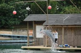 Pink Dolphin Show at Sentosa., Kathryn S - April 2008