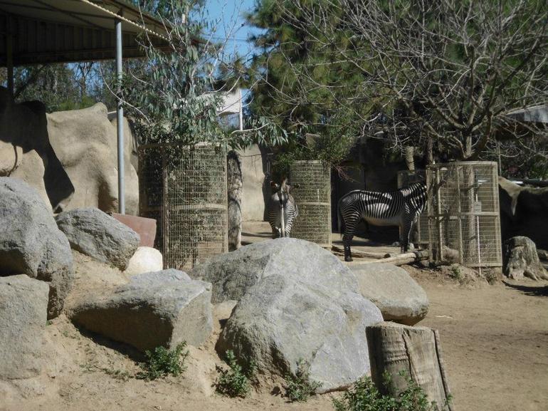 Zebras - San Diego