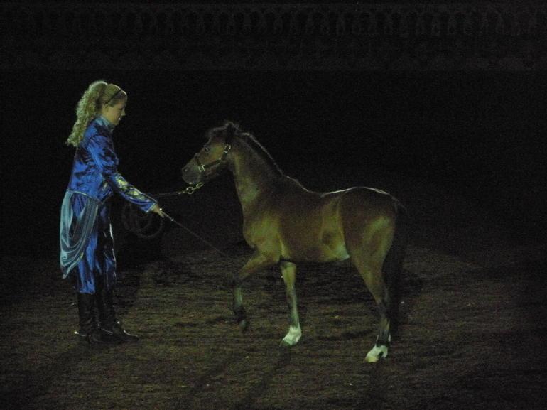 Baby Horse - Orlando
