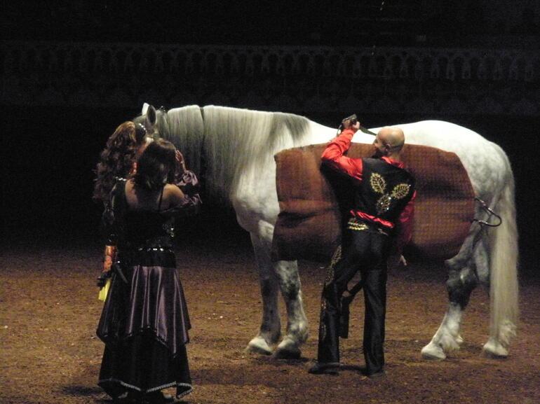 The horses were amazing - Orlando