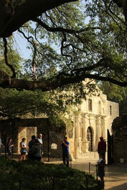 The Alamo , Greg M - November 2017