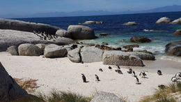 The penguins were super cute! , Kimberly S - October 2015