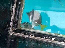 Fish eating stuff off the bottom of the boat , Becky R - August 2015
